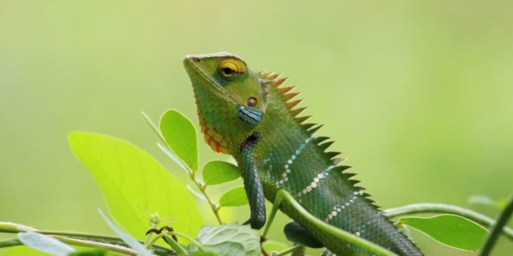 How to Stop Hiding & Be Yourself – The Chameleon's struggle to Self-Identify
